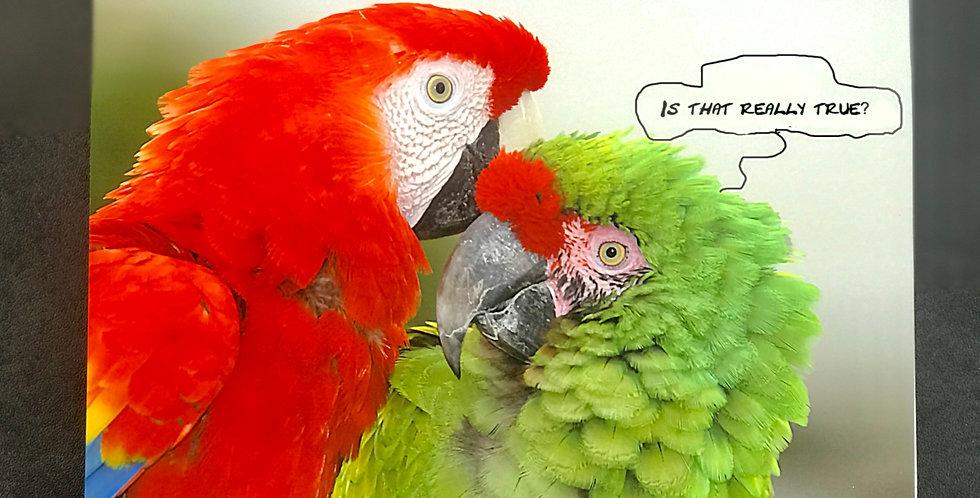 """Card, 8.5"""" x 5.5"""" - Gossipy Parrots. Blank inside"""