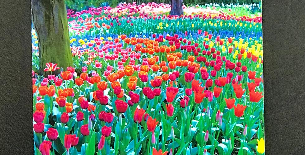 "Card, 5.5"" x 8.5"" - Tulips Surrounding Trees. Blank inside"
