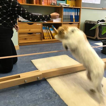 Hundesport im Klassenzimmer