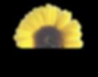 Half sunflower for website.png