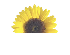 Half sunflower for website.png