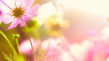 Divine Remedies: Sunshine & COVID-19
