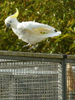 Tosca Free Bird