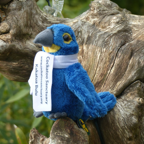 Hyacinth Macaw Soft Toy With Branded Scarf