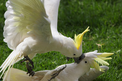Get off my perch!