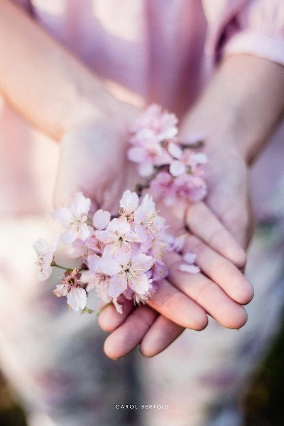 flor de cerejeira, ensaio casal