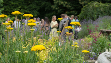 Natalia Radcliffe - Surrey Gardens