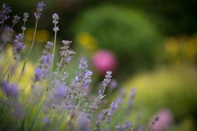 Natalia Radcliffe - Surrey Garden