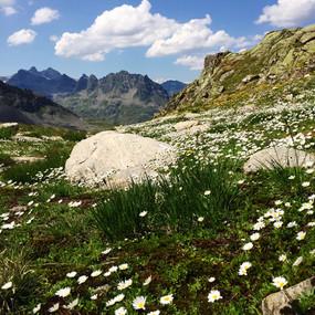 Landschaft_Blumen.jpg