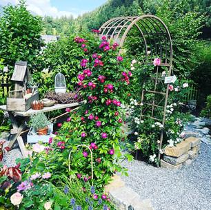 Haus Berta_Garten