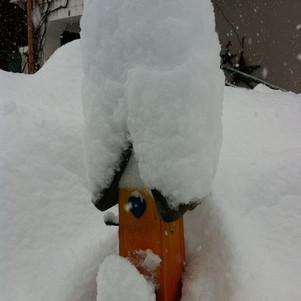 Winter05.jpg
