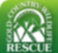 Gold Country Wildlife Rescue Logo.jpg