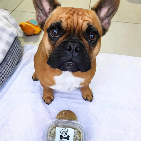 Louie @louie_the_frenchie