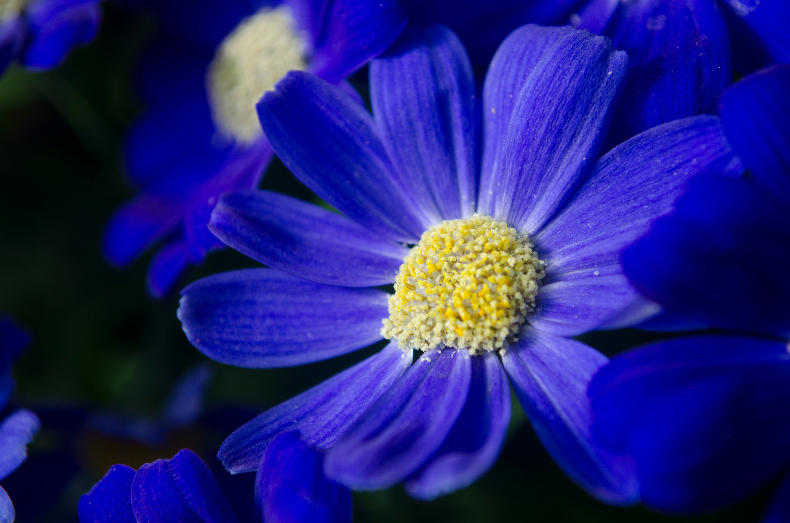 Blue flower with yellow center choice image flower decoration ideas blue flower with yellow center image collections flower decoration blue flower with yellow center choice image mightylinksfo