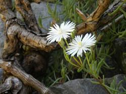 Floral Wonders - Baviaanskloof
