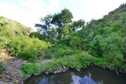 Lush Riverine Kloofs -Baviaans Lodge