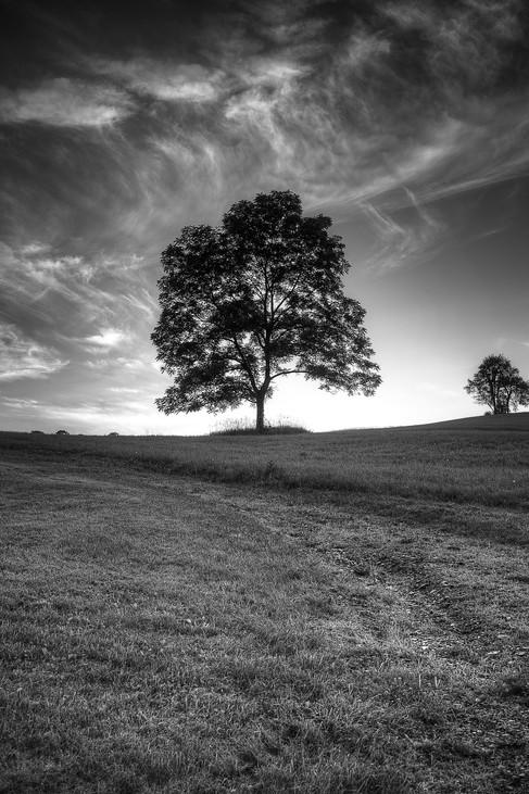 landscape (2 of 25).jpg