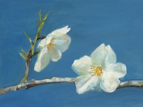 Almond flowers blue sky_ 092_ 60X80cm