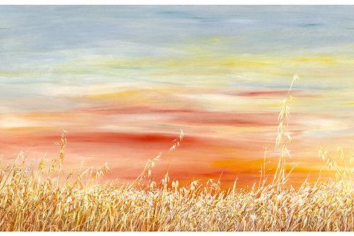 A yellow sunset summer field _039_ 100x120 cm
