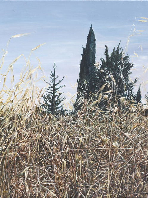 A summer field and a Cypress tree_ 492_ 100X120cm