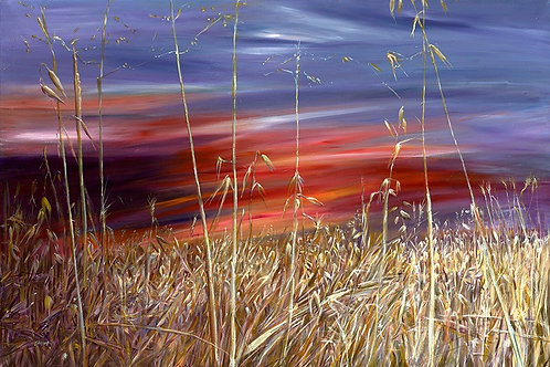A sunset summer field - 001