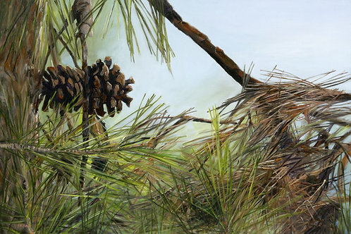 A pine tree branch, 100X150_069
