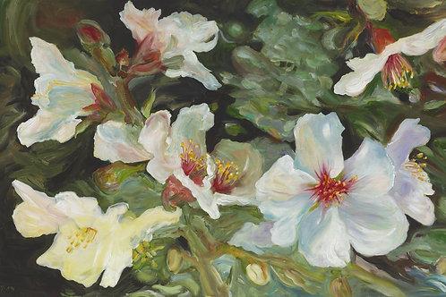 Almond flowers_107_ 150x100cm