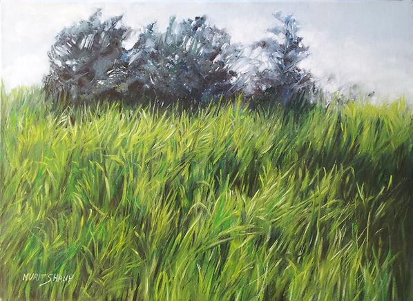 green field 300.jpg