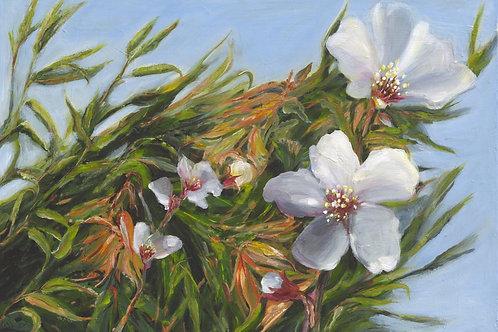 Almond flowers_107_ 70x100cm