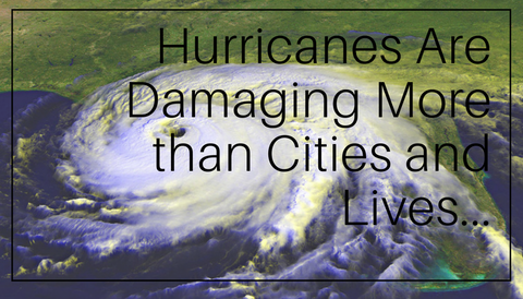 Hurricanes Are Damaging More than Cities and Lives...