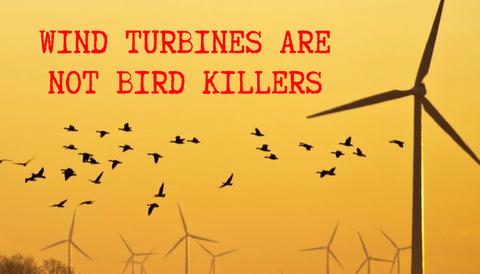 Wind Turbines are Not Bird Killers