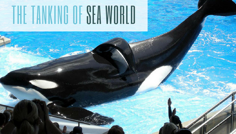 "#TBT: The ""Tanking"" of Sea World (SEAS)"