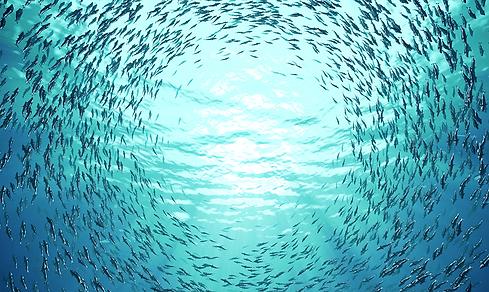 fish-cirularity.png