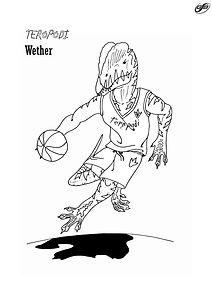 Teropodi - Basket.jpg