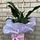 Thumbnail: Peace Lily
