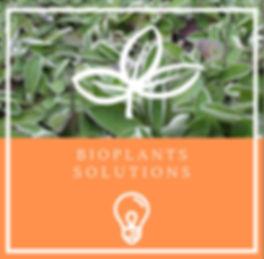 bioplants solutions piloselle.jpg