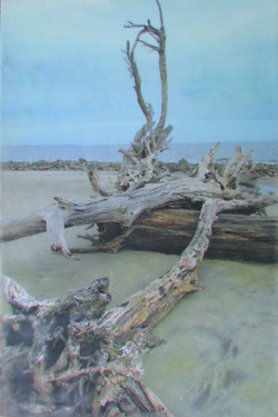 Blue Skies and Driftwood.jpeg