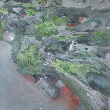 Moss on the Beach.jpeg
