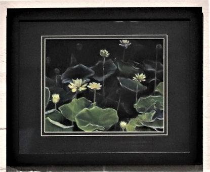 Lotus Evening.jpg