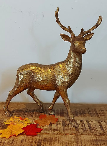 Gold Stag