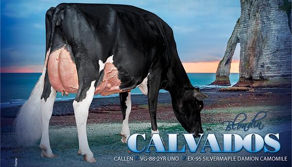 201808-Calvados-HeadPage.png