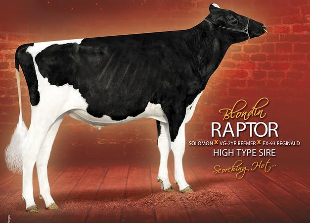 Raptor-122018-EN-HQ (1).png