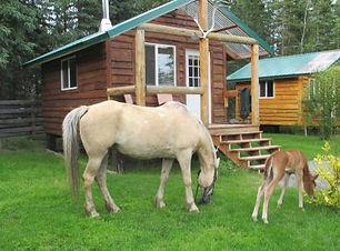 Alaska Cabin Rental Cooper Landing Glamping