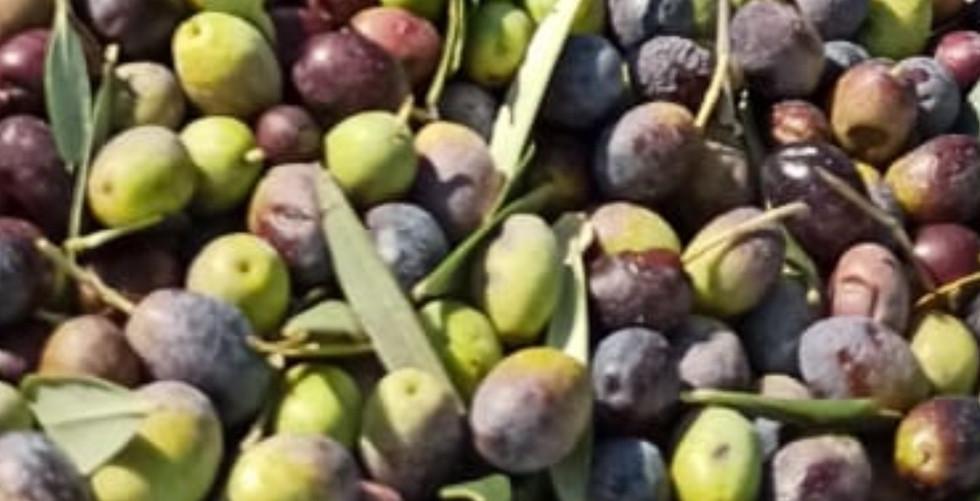 Les Huiles d'olive et les Vinaigres