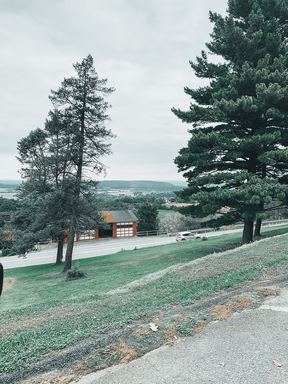 Trees, hill, green grass, scenic view, pine trees