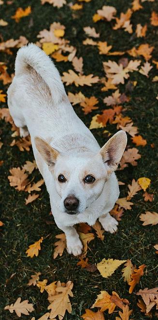 dog-leaf-leaves-autumn_edited.jpg