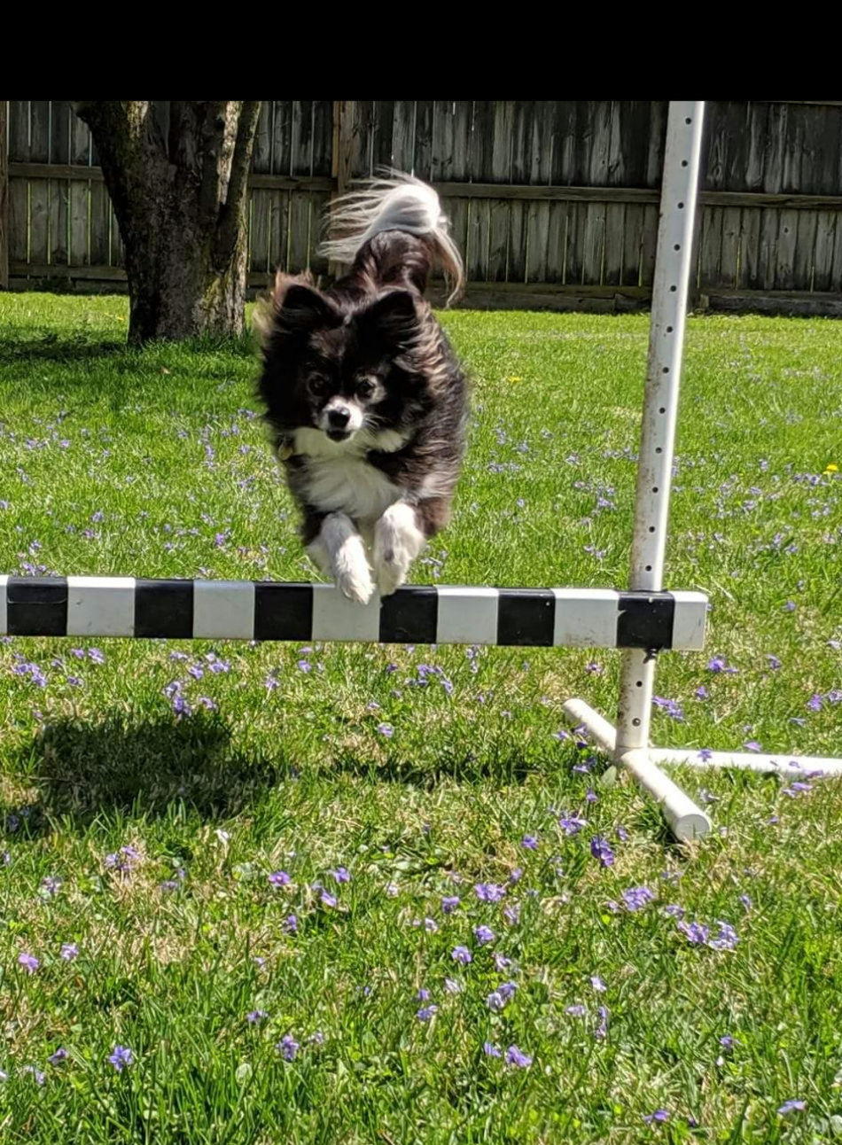 Fia's Introduction To Rally Obedience