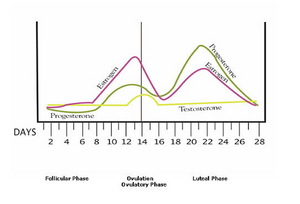 Graph displaying the trends of estrogen and progesterone during the menstrual cycle