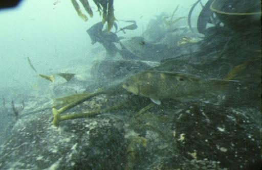 Schah underwater
