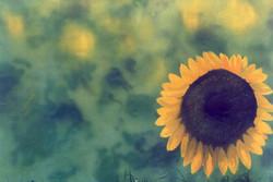 sun-f1.jpg